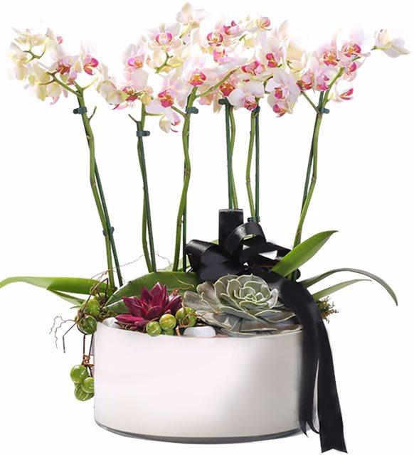 Orkide Aranjmanı