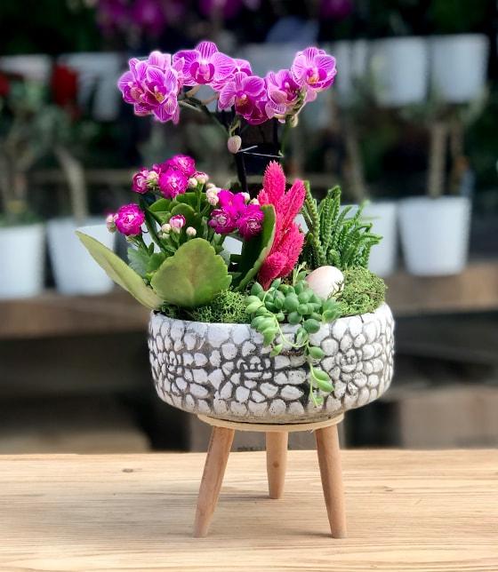 Multi Orkide Tanzim